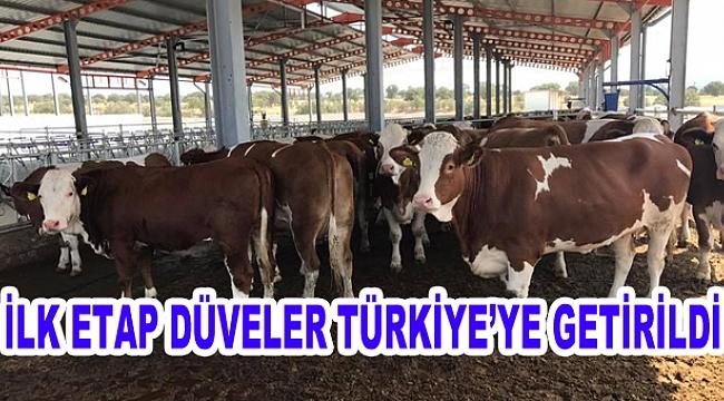 Projenin İlk Etap Düveleri Türkiye'ye Getirildi