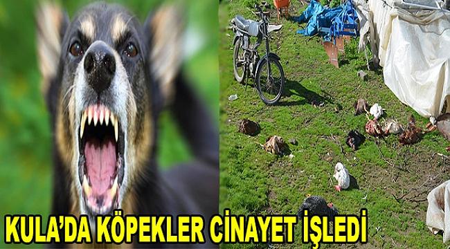 Kula'da Köpekler Cinayet İşledi