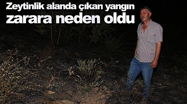 Zeytinlik alanda çıkan yangın zarara neden oldu