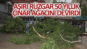 Aşırı rüzgar 50 yıllık çınar ağacını devirdi